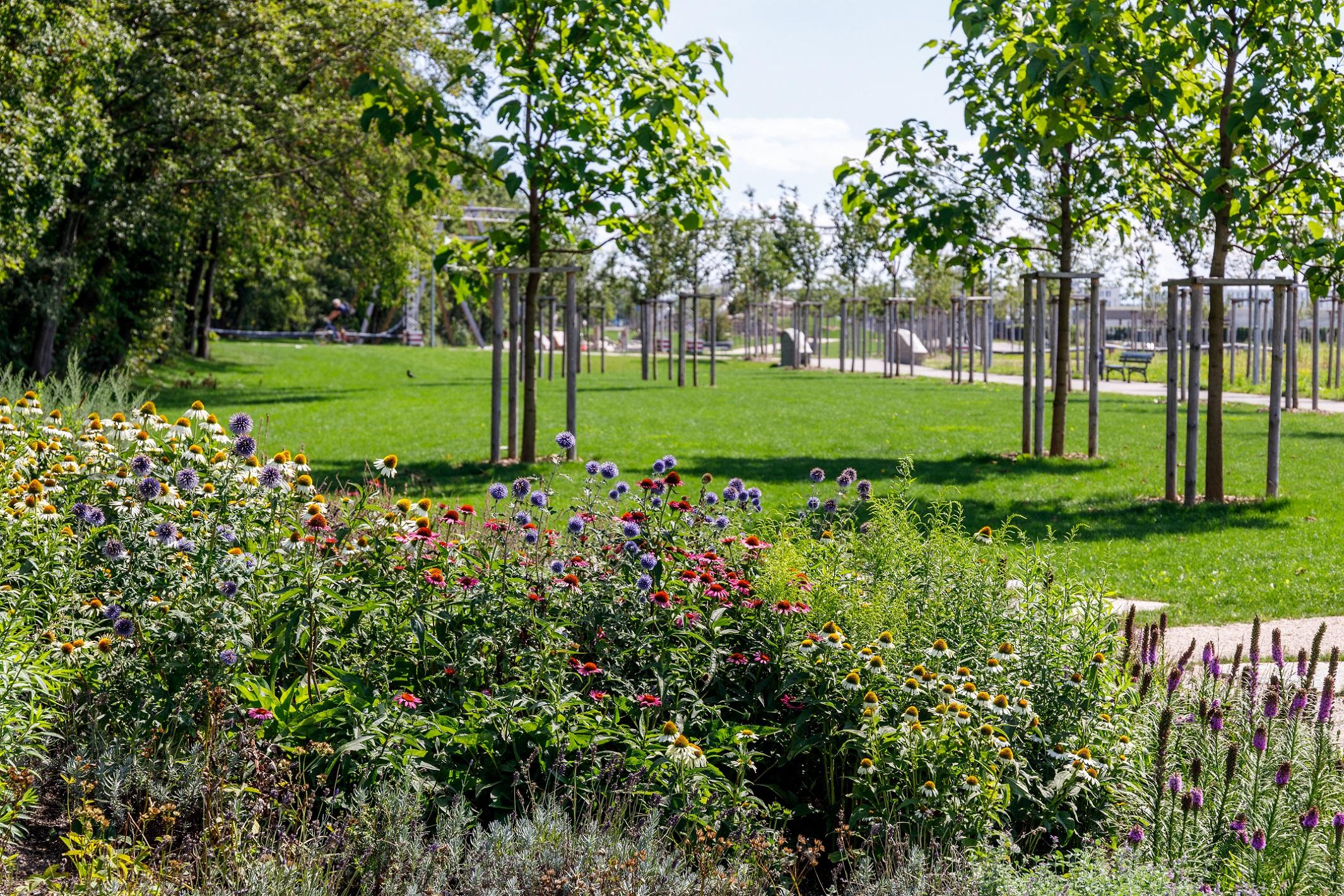 Blick vom Kräutergarten ins Grünband